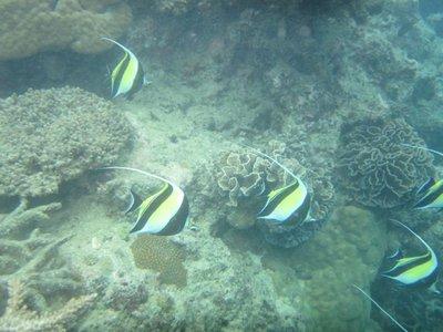 Hideaway_Reef2.jpg
