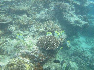 Hideaway_Reef3.jpg