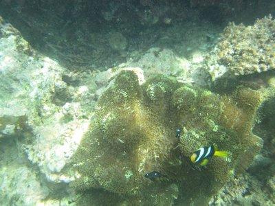 Hideaway_Reef4.jpg