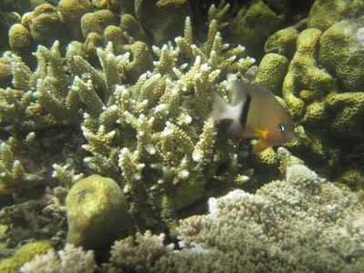Hideaway_Reef5.jpg