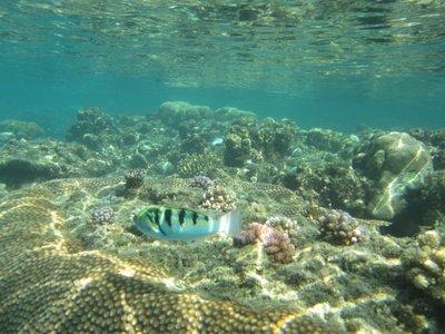 Hideaway_Reef6.jpg