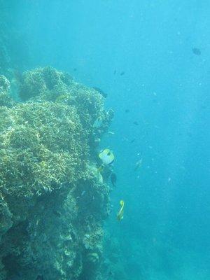Hideaway_Reef7.jpg