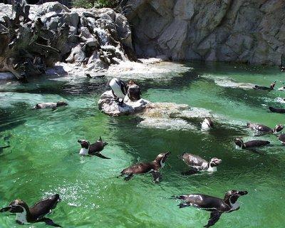 Tiergarten Schonbrunner - Zoo Vienna