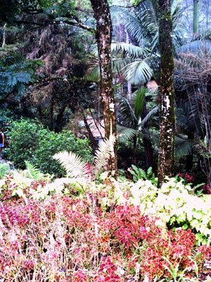 Garden on top of mountain at Puerta Plata