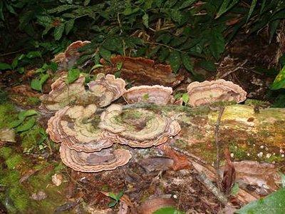 Mushroom booming in the jungle