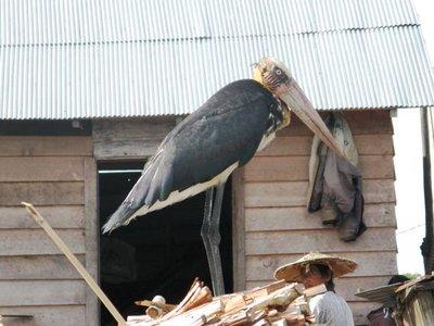 River birds living in harmony with fishermen