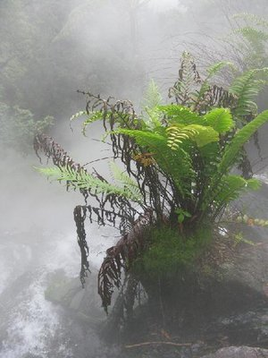 Fern in the hot spring