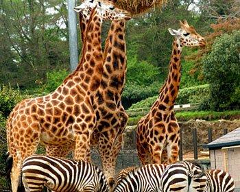 Dublin-Zoo.jpg