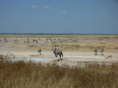 Amazing Etosha National Park