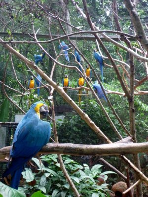 Walking through the macaw aviary