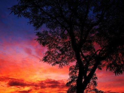 Cambridge (NZ) Sunset