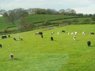 Farmland England
