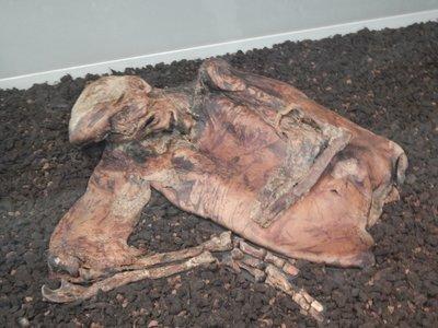 Lindow Man - died between 2BC-119AD
