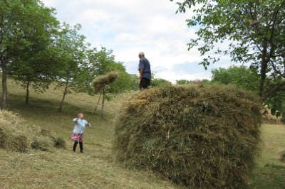Building the pile of hay