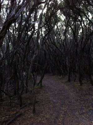 A Harry Potter style forest?