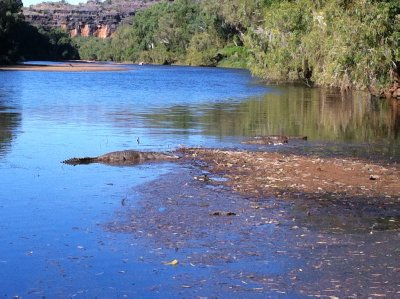 Fresh water croc, Windjana Gorge