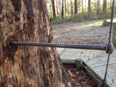 One of the steel pins in the Diamond Tree near Pemberton WA
