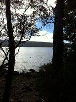 Lake St Clair Platypus