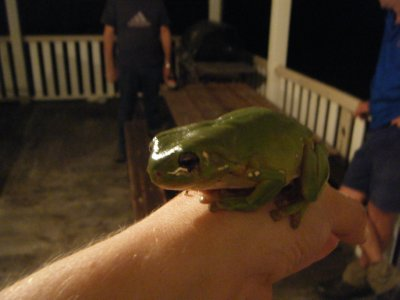 The frog that got squished!
