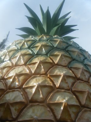 The Big Pineapple!