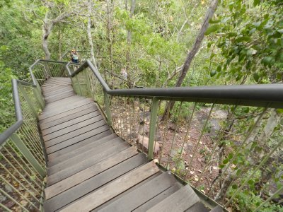 Stairs Down to Florence Falls
