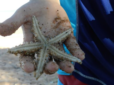 Starfish in Izaaks hand