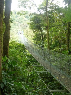Canopy Tour, Monteverde (10)