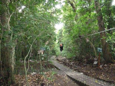 Canopy Tour, Monteverde (4)