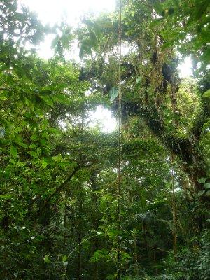 Monteverde Cloud Forest Reserve (7)