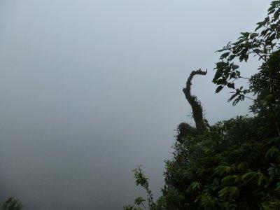 Monteverde Cloud Forest Reserve (21)
