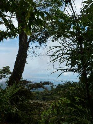 Monteverde Cloud Forest Reserve (34)