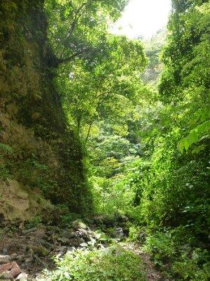 Volcan Maderas Jungle (3)