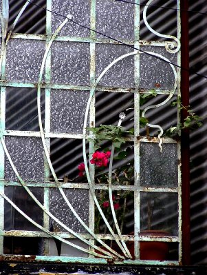 broken glas and a rose