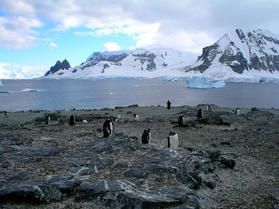 meeting the Pinguins