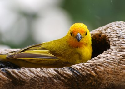 Birds of Bonaire