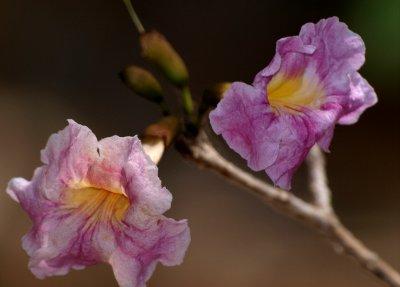 Palu di Mangel flowers