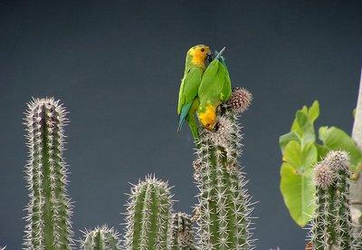 Cactus Dinner