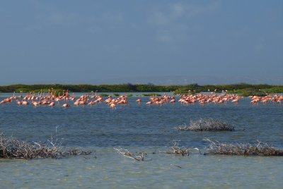 big flamingo group