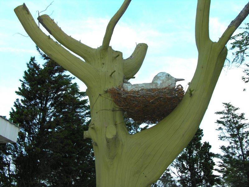 wooden birds nest