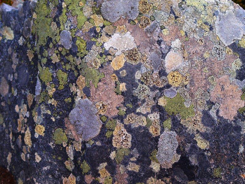 stone mosaik