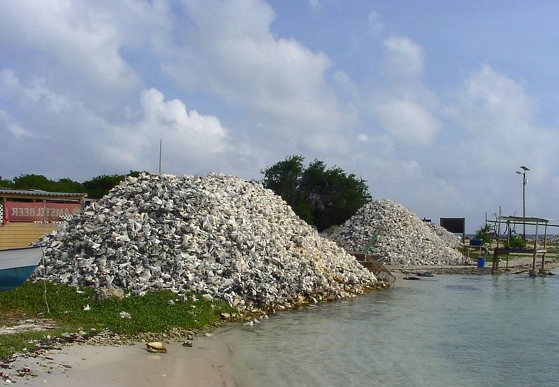 Conch piles at Lac Cai