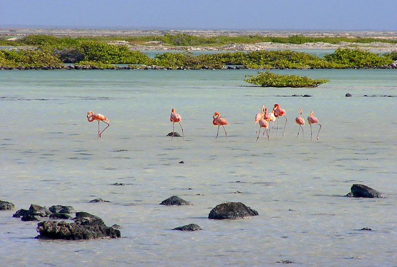 Saltpans and Flamingos