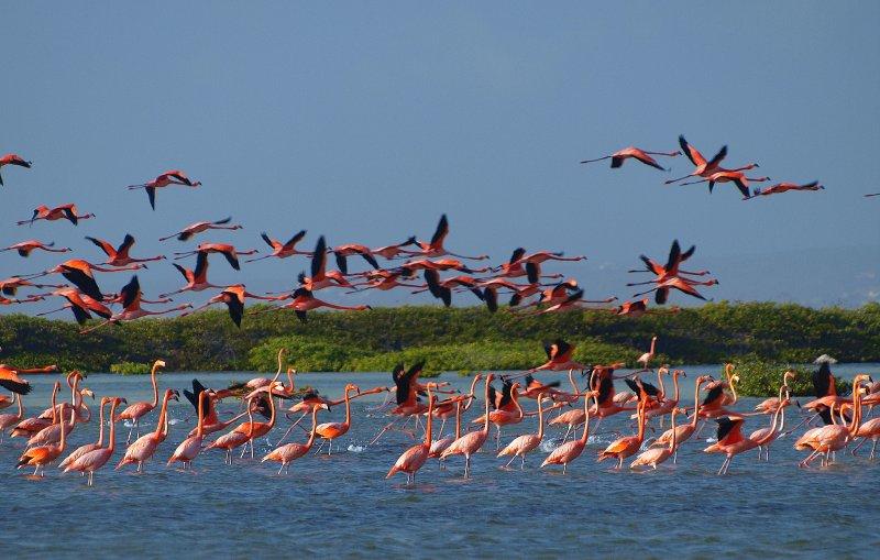 flying flamingos
