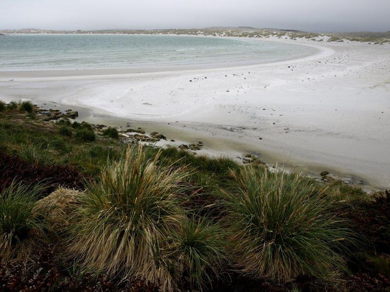 beach at the Falkland Islands