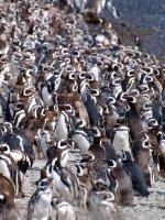 Pinguin beach