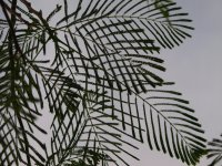 leafs against sky