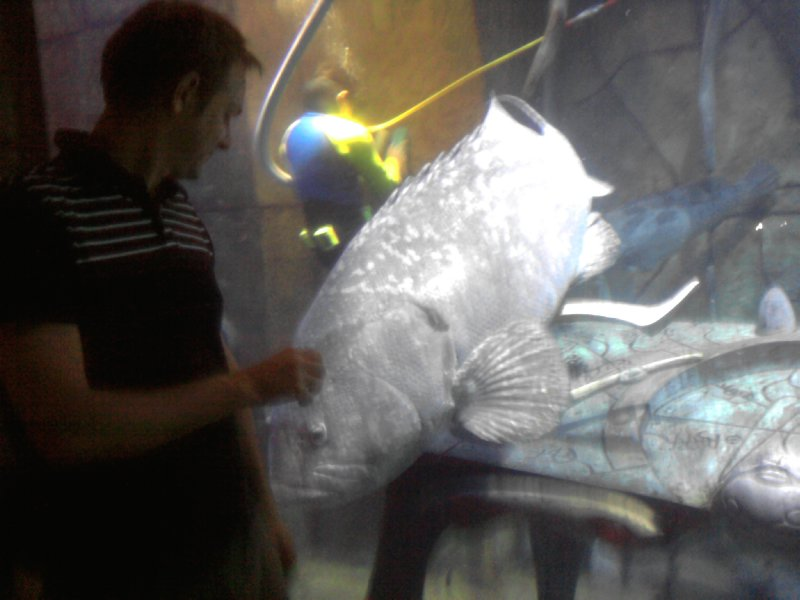 Dubai Aquarium Making Friends
