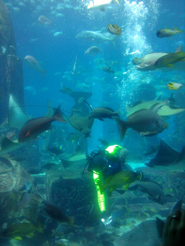 Dubai Aquarium Feeding Time
