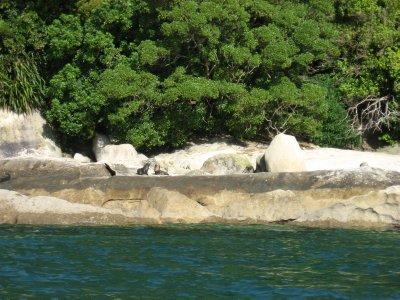 Abel Tasman Nat'l Park 27