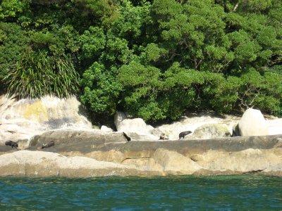 Abel Tasman Nat'l Park 26